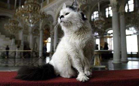 St Petersburg: the cats of the Hermitage - Telegraph